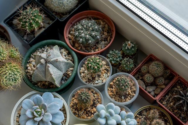 Le guide ultime des plantes d'intérieur